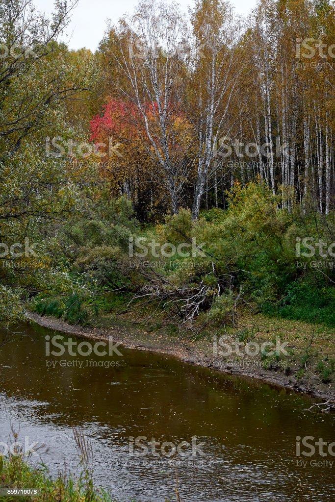The Osha river in Omsk region in autumn stock photo