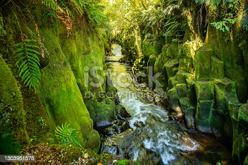 """The """"majestic scenery in the canyon in the Whirinaki Forest with the river racing through the chiselled canyon walls covered in loss and lichen"""
