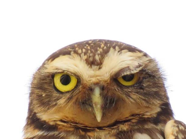 The owl picture id806309920?b=1&k=6&m=806309920&s=612x612&w=0&h=7sfj2gbn8qd5heqbsp0ykfcvuprlitfxmc33yjntckm=