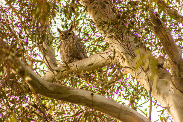 The Owl says 1? stock photo