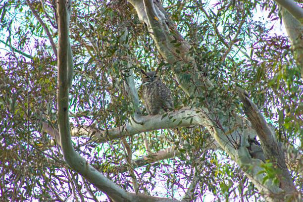 The Owl says 2? stock photo