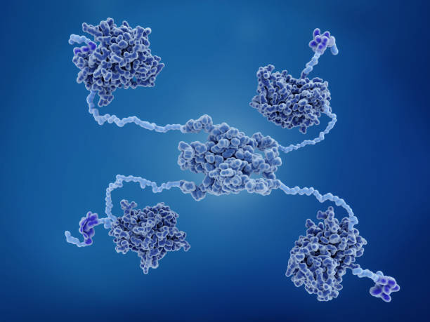 The p53 tumor suppressor protein. p53 prevents cancer formation and acts as a guardian of the genome. Mutations in the p53 gene contribute to about half of the cases of human cancer. stock photo
