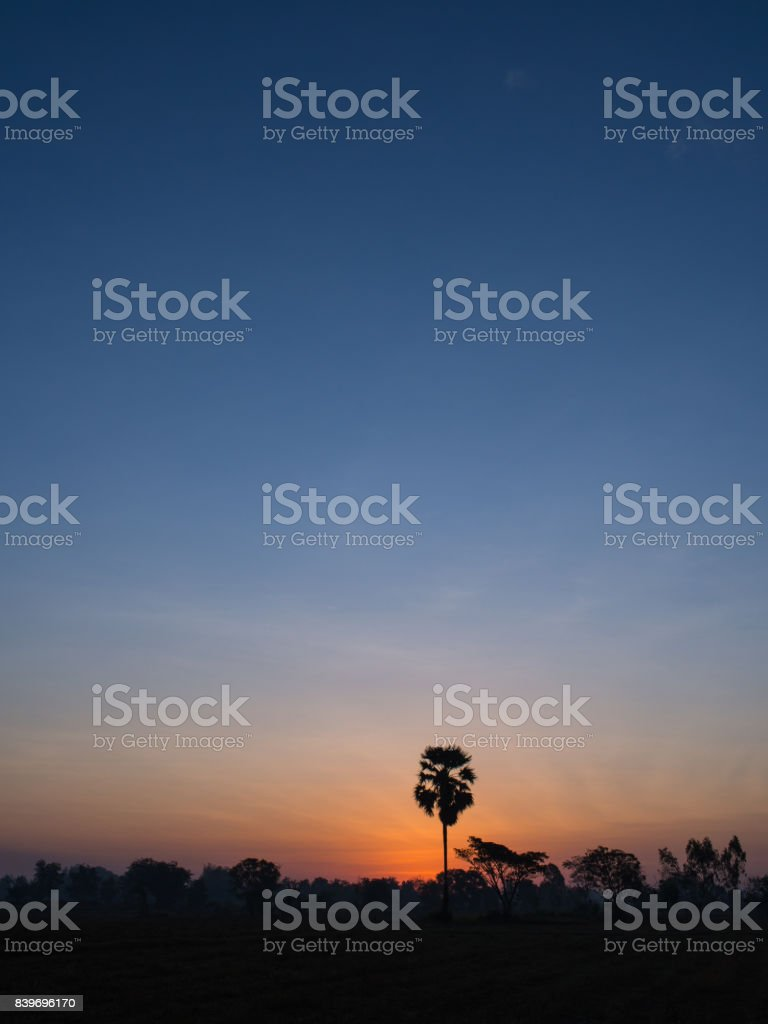 The Palm Alone stock photo