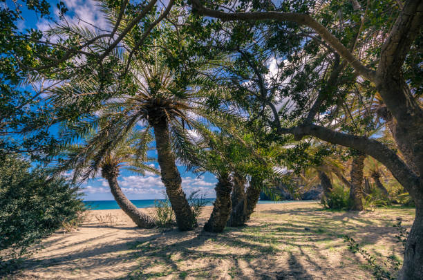 The palm forest of Vai is one of the most popular sights in Crete.It attracts thousands of visitors every year.They come not only for its wonderful palm forest,but also for the amazing tropical beach stock photo