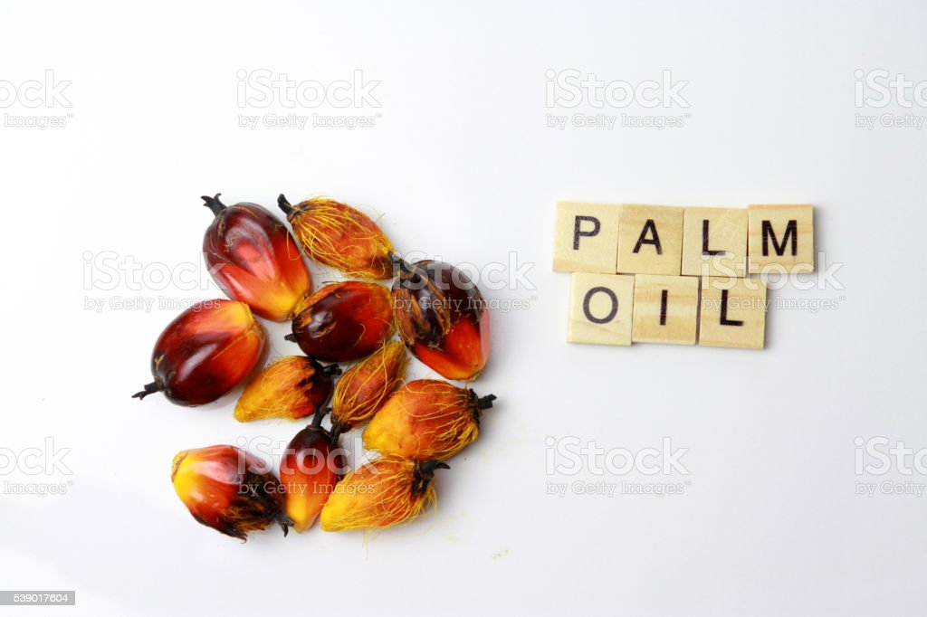 the palm oil stock photo