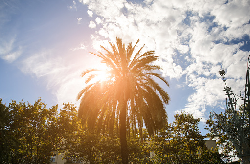 The palm tree in sun lights. Southern plants outdoors. Nature photo.