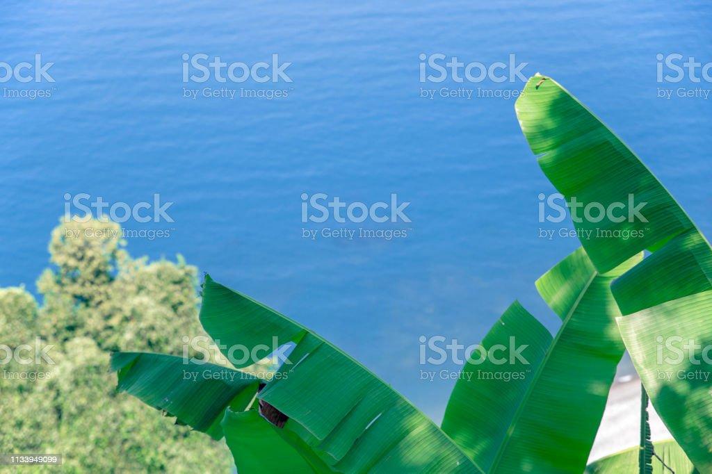 De palmboom deel met zee in Georgië botanische tuin. foto