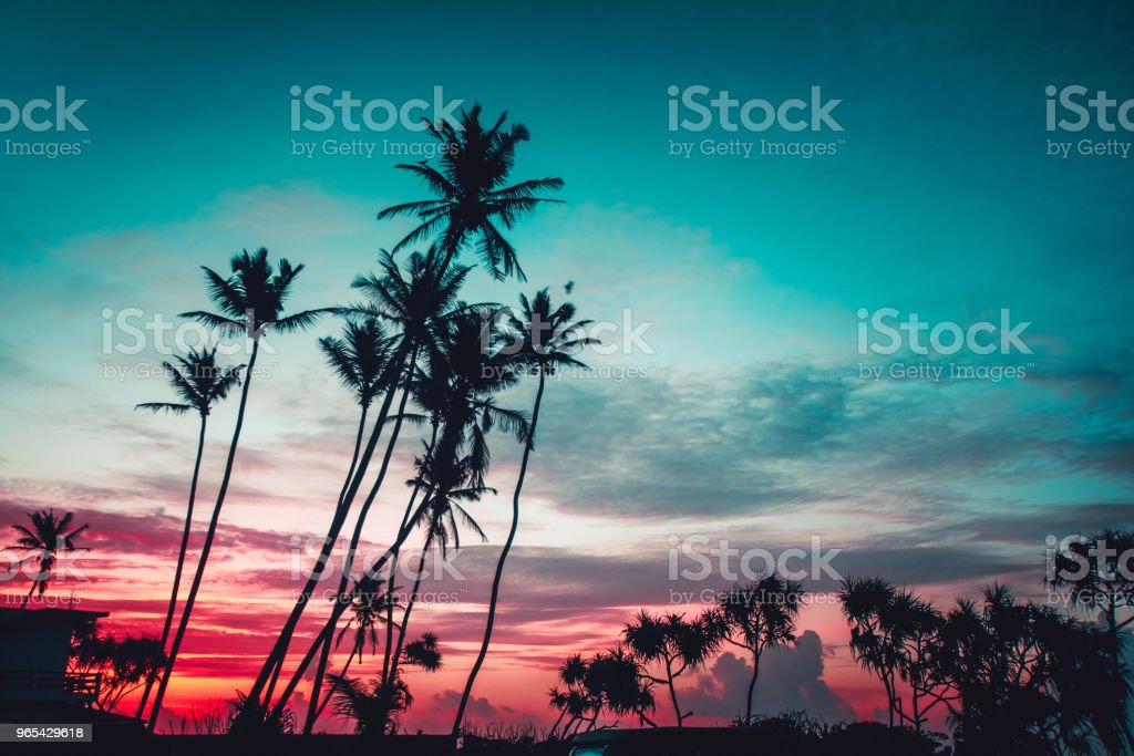 The palms on the bright sunset background royalty-free stock photo