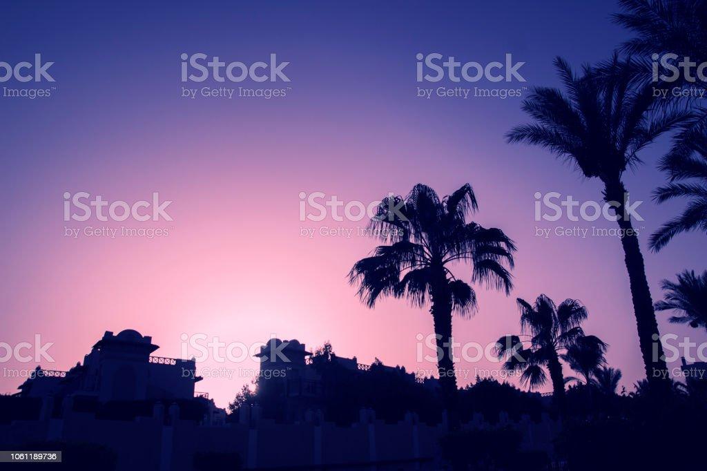 The palms trees, new rertro wave, Miami stock photo