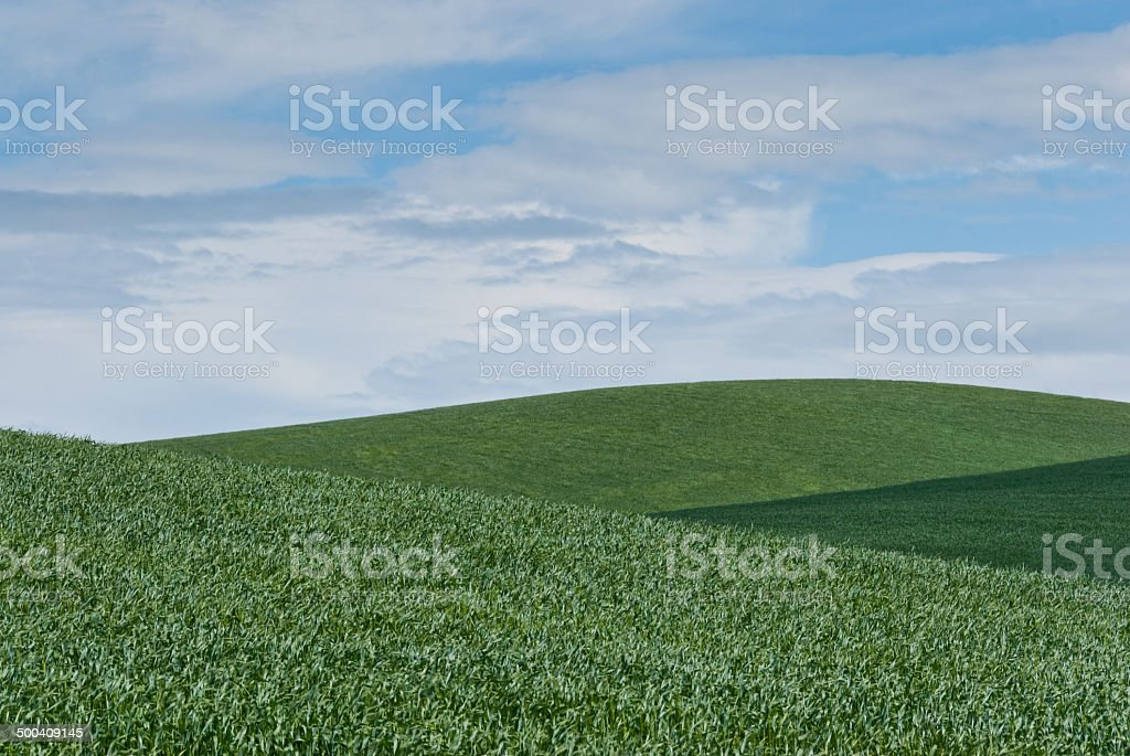 Palouse Wheatfield - Royalty-free Agricultural Activity Stock Photo