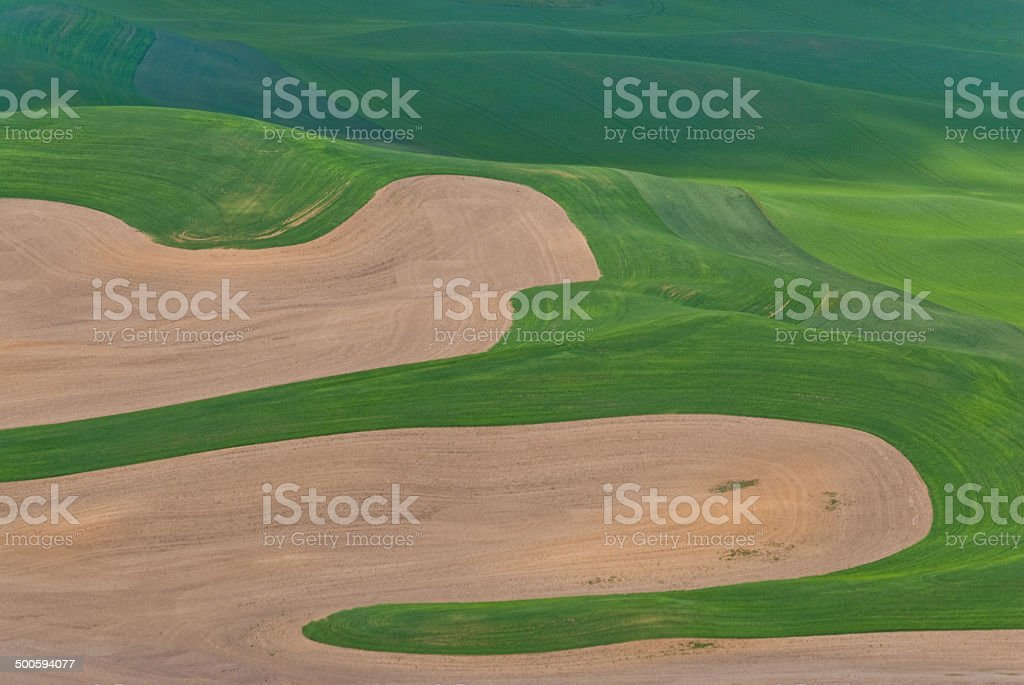 Wheatfield Pattern - Royalty-free Agricultural Activity Stock Photo