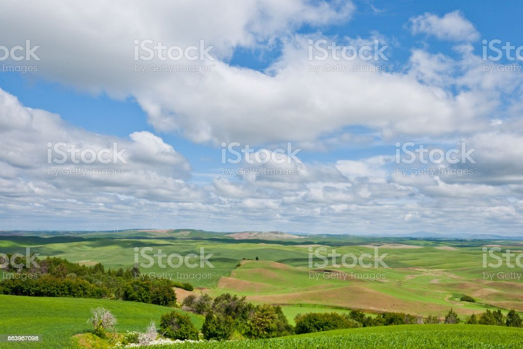 Wheatfield in the Palouse stock photo