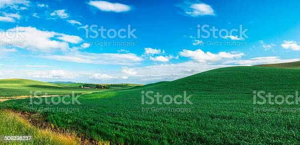 Photo of The Palouse Rolling Hills (wheat)