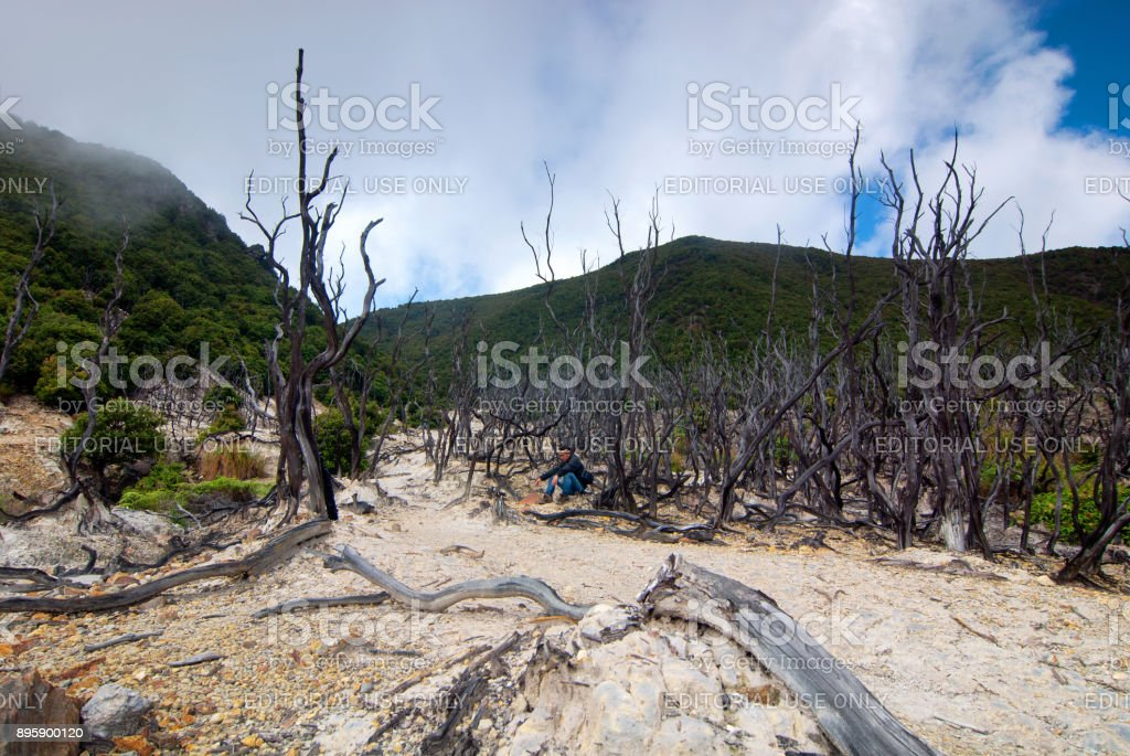 The Papandayan Dead Forest stock photo