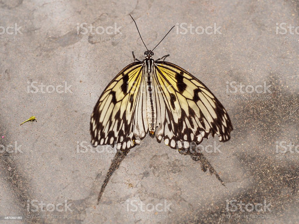 The paper kite on marmer stock photo