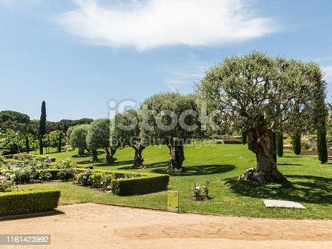 the Park Cervantes, rose garden, Barcelona. Spain.