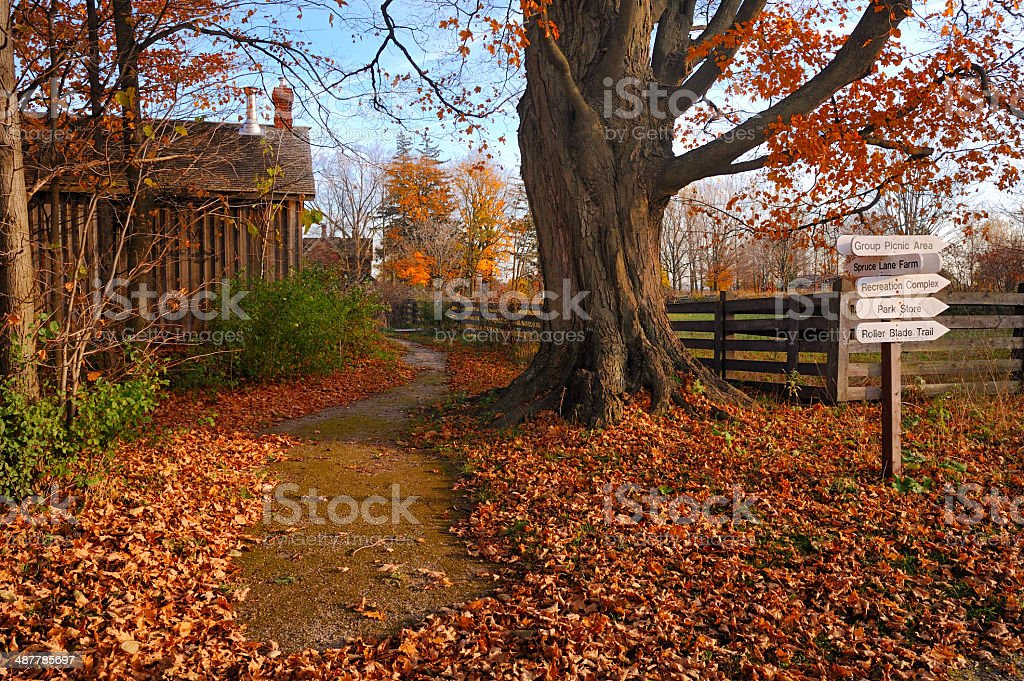 The park in the fall stock photo