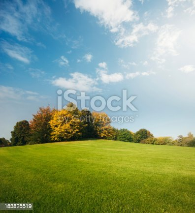 Beautiful green grass in a park with trees and a blue sky.