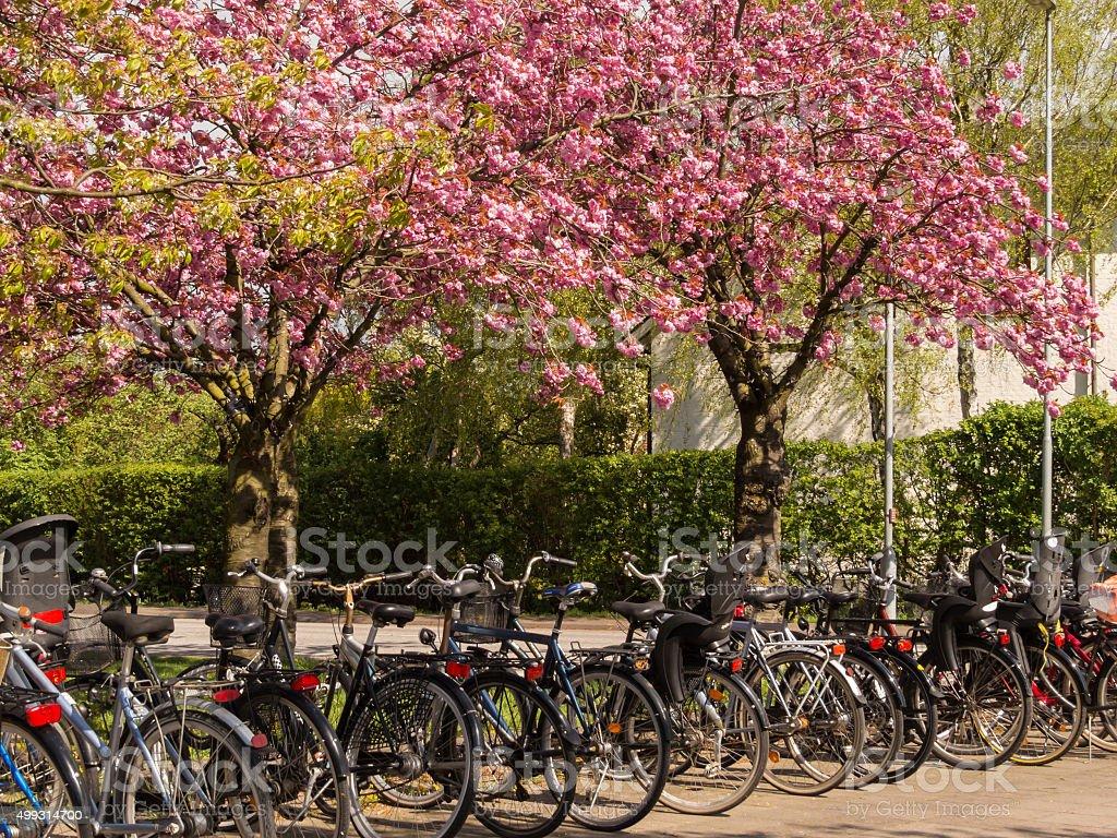 На парковку велосипедов под цветущим деревьев стоковое фото