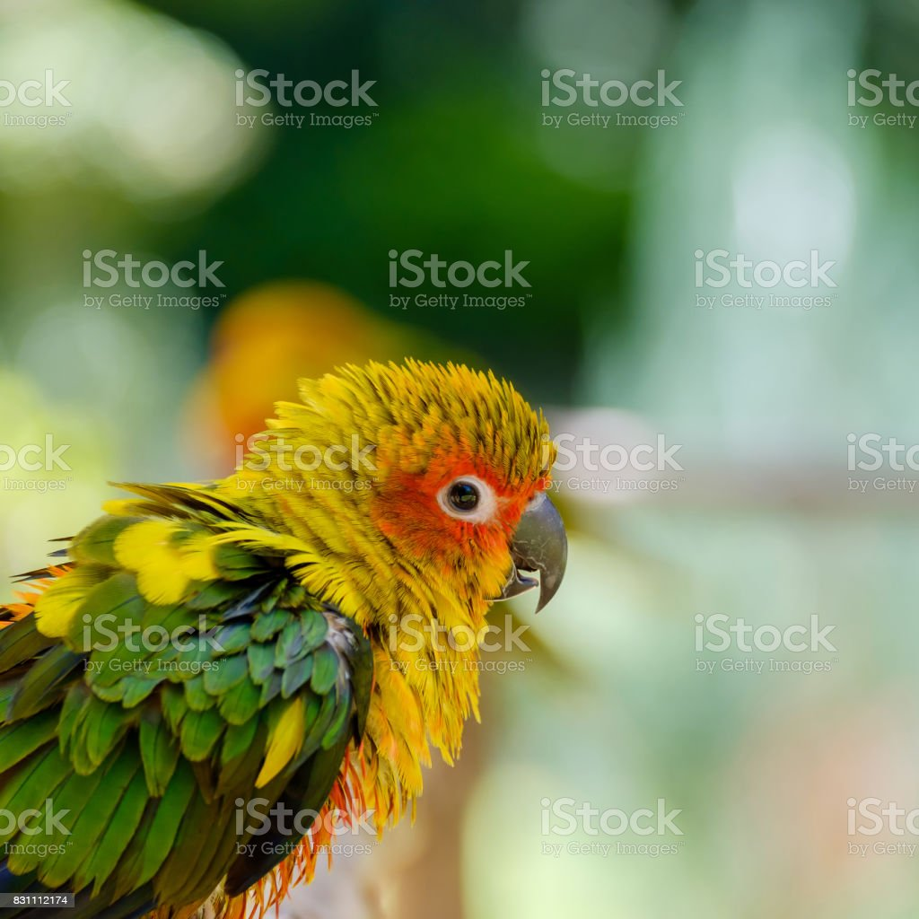The parrot looking. stock photo