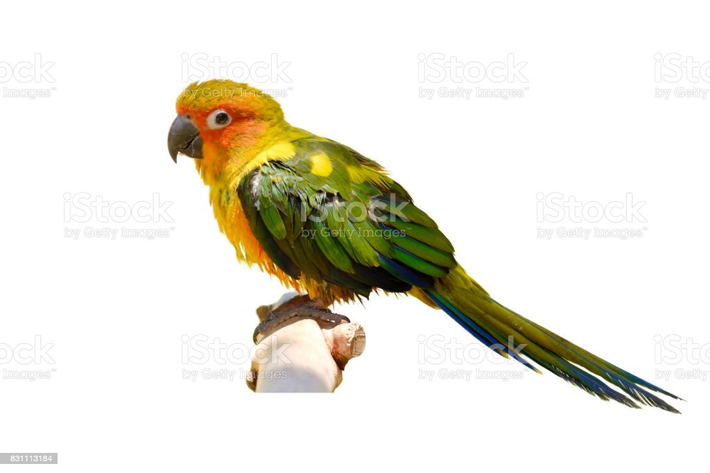 The parrot on branch. stock photo