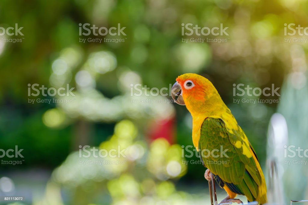 The parrot on soft light. stock photo