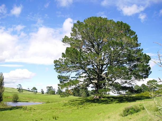 the party tree in all its glory - mcdermp stock pictures, royalty-free photos & images