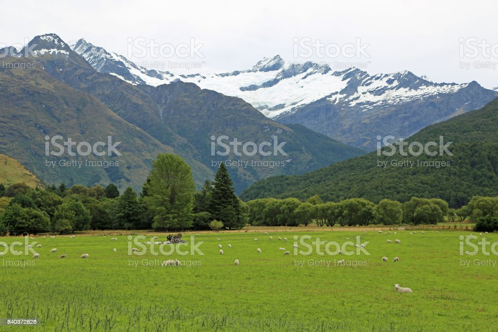 The pasture and Rob Roy glacier stock photo