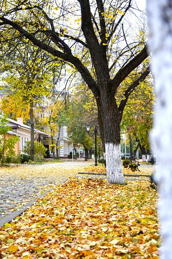 Autumn leaves lying on wet wooden planks.