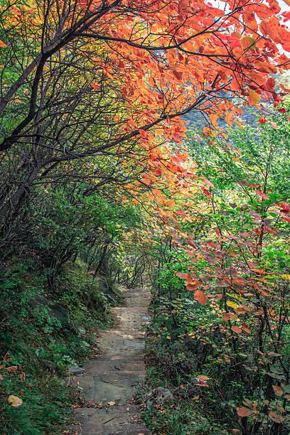 Weg und der Roten Blätter – Foto
