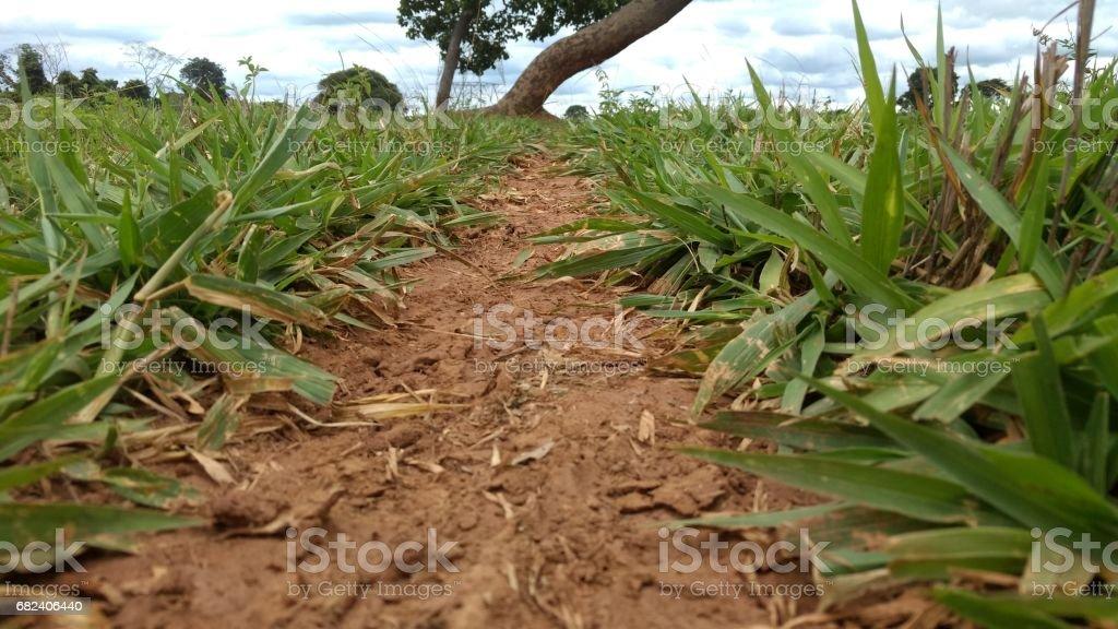 路徑和草叢中樹 免版稅 stock photo