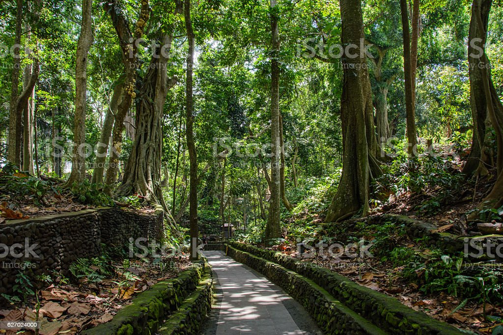 The path in the forest of monkeys, Ubud, Bali, Indonesia stock photo