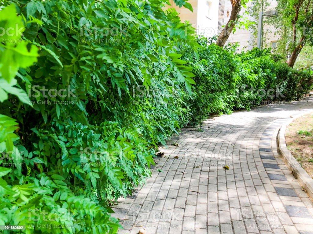 公園裡的小路兩旁都是石磚, 旁邊是盛開的灌木叢。 - 免版稅以色列圖庫照片