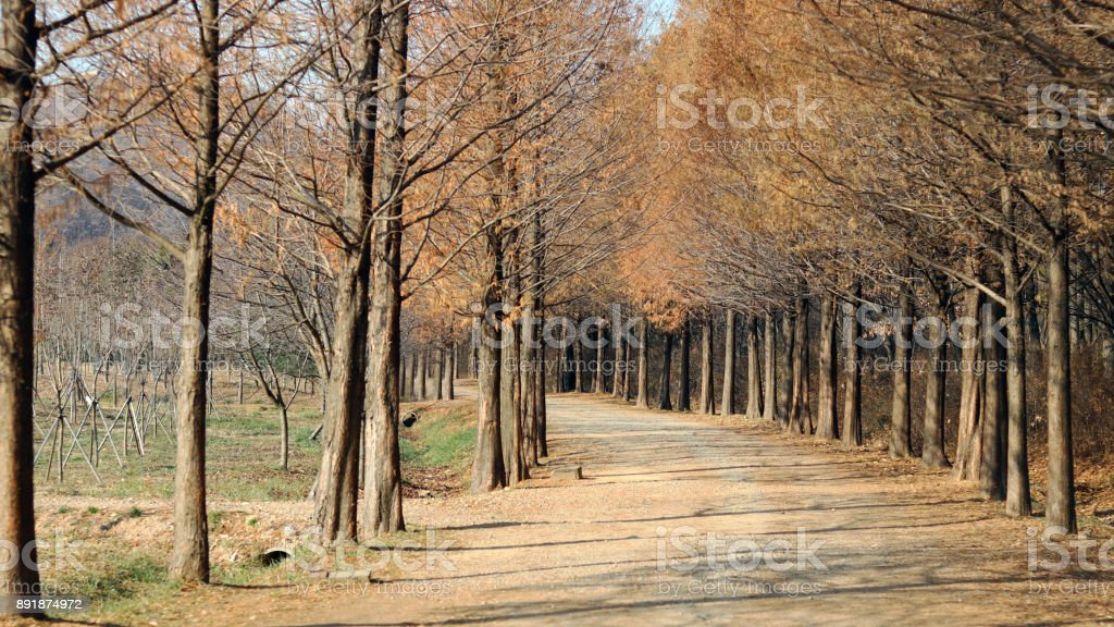 The path of a forest. stock photo
