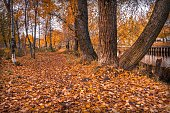 A path of fallen leaves in the park among the trees. Autumn landscape