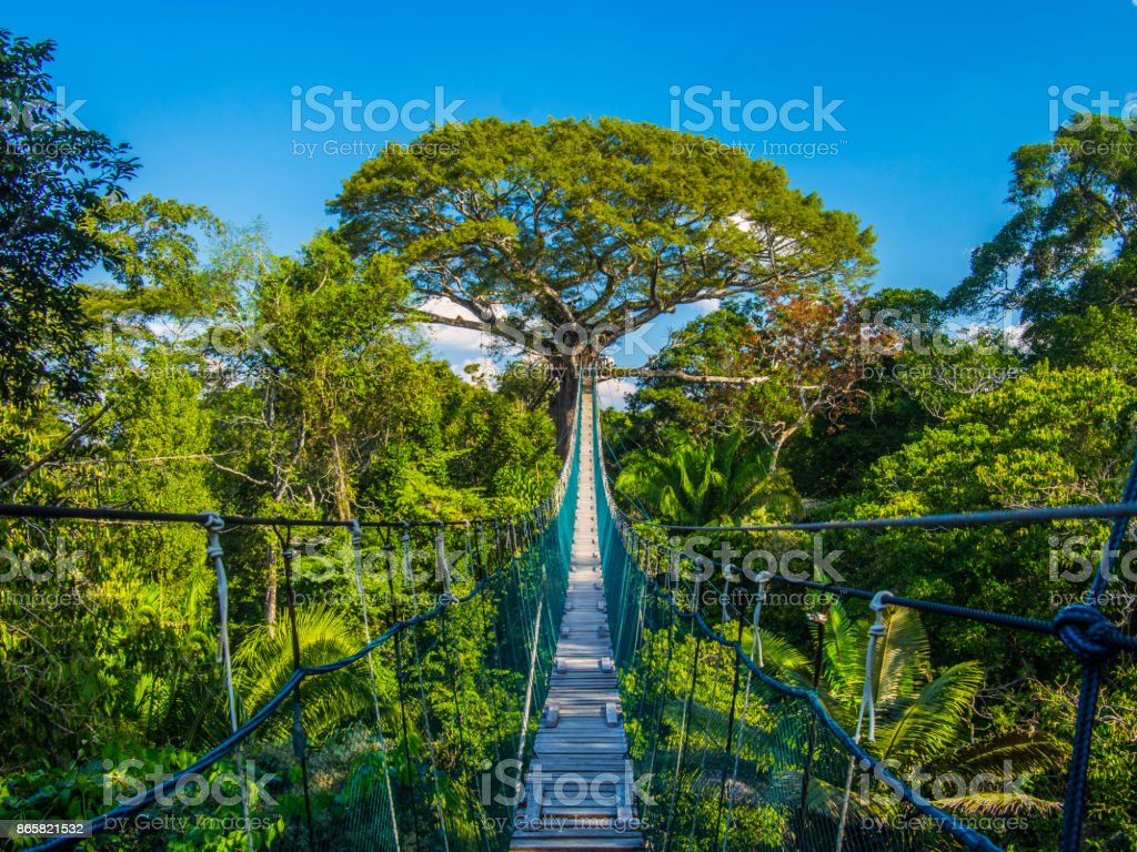 The path to mother earth, on a high suspended bridge in an Amazonian Canopy, Peru stock photo