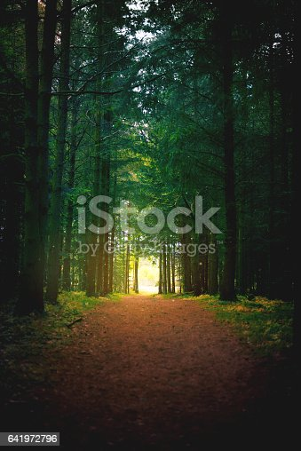 Shot of a pathway in a beautifully lush forest