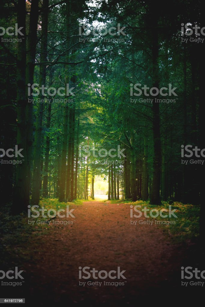 The path to peace stock photo