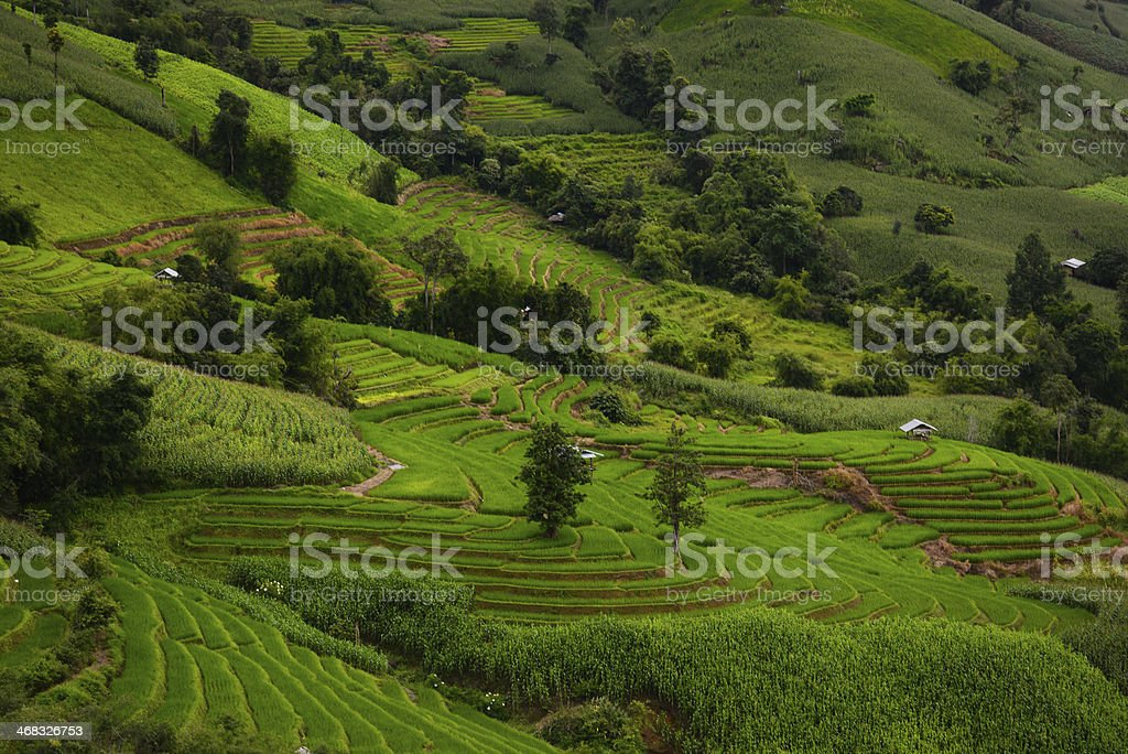 The pattern of Green Terraced Rice Field in Chiangmai, Thailand royalty-free stock photo