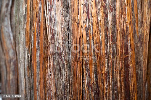 The pattern of tree texture and trunk background.