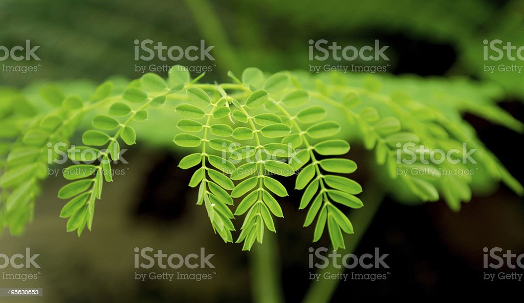 the pattern royalty-free stock photo
