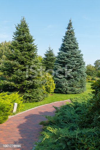 istock The paved walkway in the park running between the blue fir trees is very beautiful 1001276594