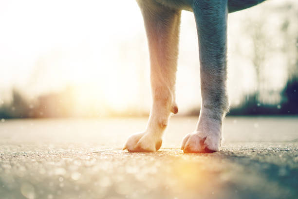 the paws of a dog in the sunlight stock photo