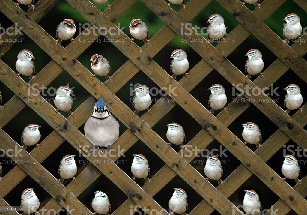 The Peeples vs. Jay Dour stock photo