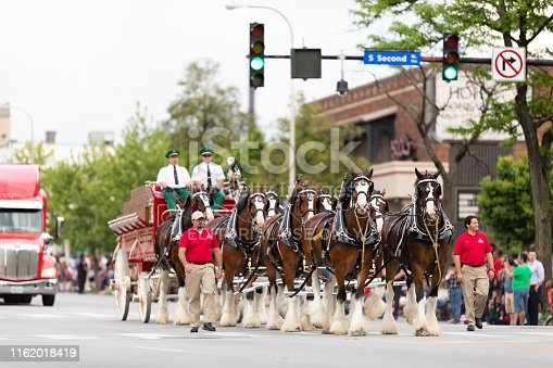 Louisville, Kentucky, USA - May 2, 2019: The Pegasus Parade, The Budweiser Clydesdales going down the street during the parade