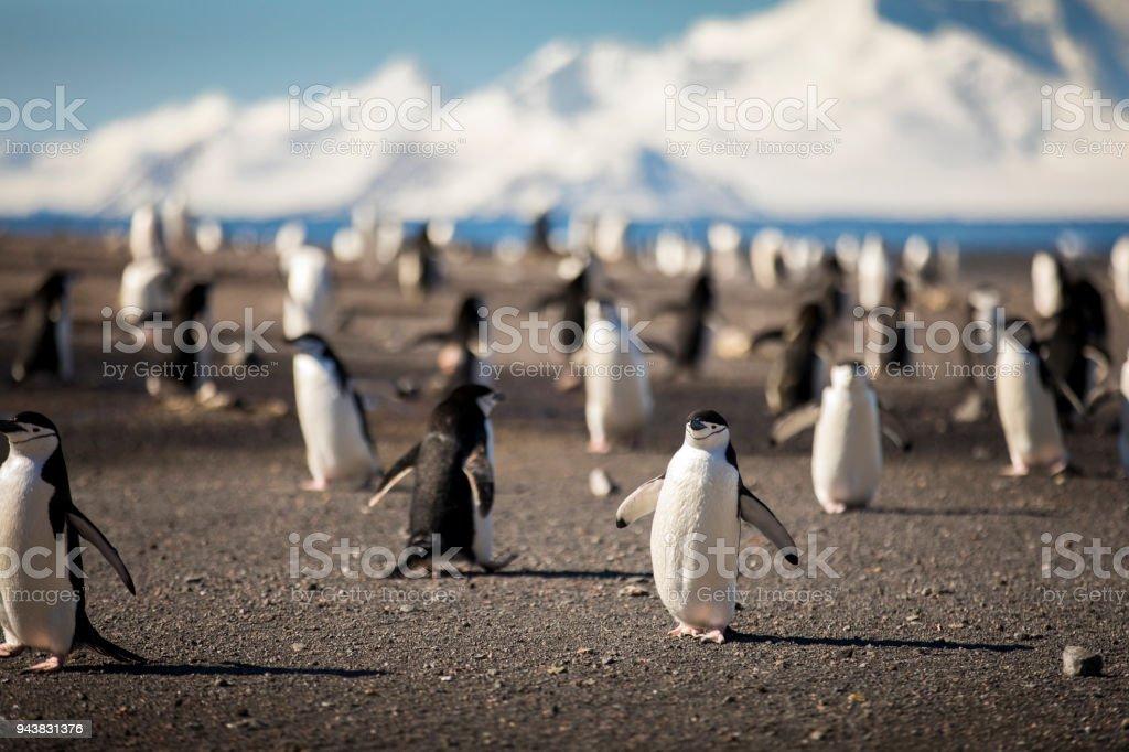 The Penguin Highway stock photo