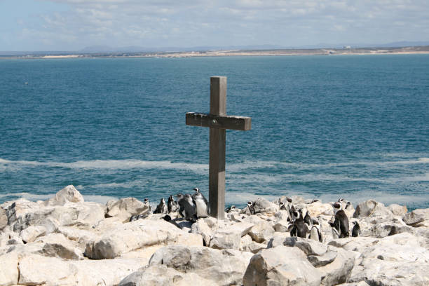 The penguins of St. Croix stock photo