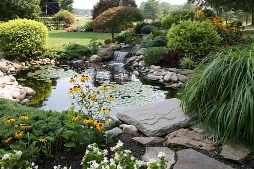 Little pond at Vondelpark landscape on sunny summer day in Amsterdam, Netherlands