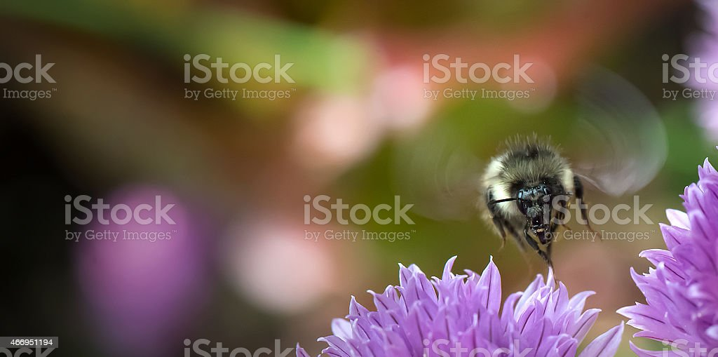 The Perfect Buzz stock photo