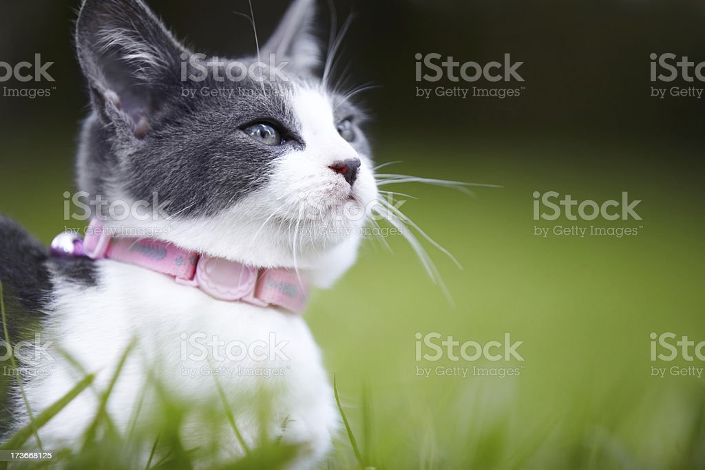 The perfect cat royalty-free stock photo